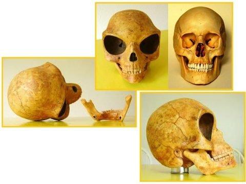 Силендский череп