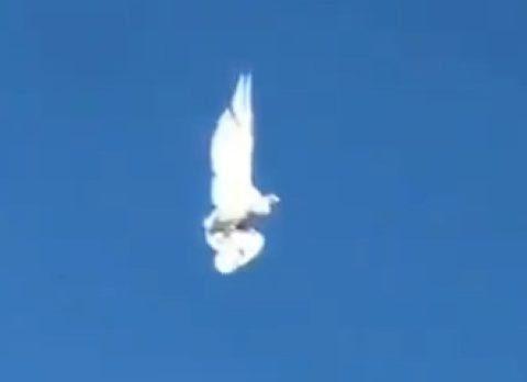 Птица застыла в воздухе