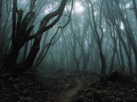 Аокигахара - лес самоубийц