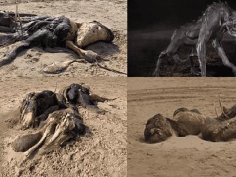 Аномалия Эйнсдейла - странное неизвестное существо на пляже Ливерпуля